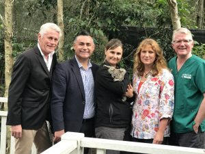 Sanctuary for sick koalas on Tweed Coast